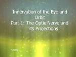 Innervation of the Eye and Orbit