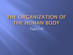 The Organization of the Human Body