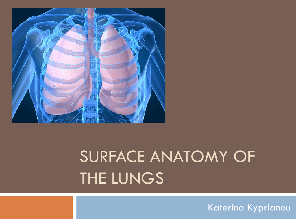 Surface anatomy of the lungs - University of Nottingham