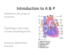 Anatomical Terminology - Mohawk Valley Community College