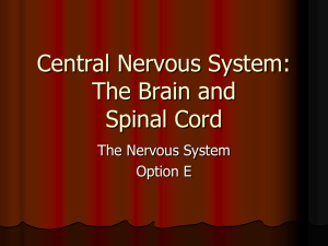 Central Nervous System: The Brain and Spinal Cord