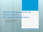 SALC07 Biological Sciences Head & Neck 4: Normal Swallow