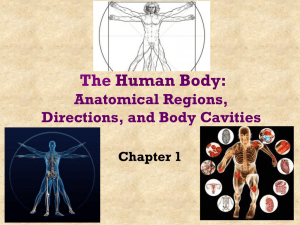 Chapter 1 The Human Body