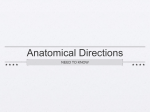 Anatomical Directions - Kleins