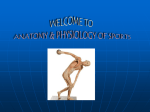 Introduction to Anatomy & Physiology of Sports