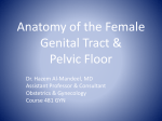 Anatomy of the Female Genital Tract & Pelvic Floor