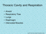 Thoracic Cavity and Respiration