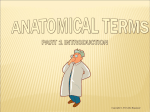 Notes - Anatomical Terms Part 1
