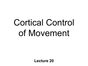 BN20 cortical motor control