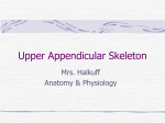 Upper Appendicular Skeleton