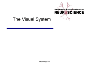 02 The Visual System