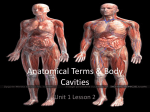 Levels of Organization and Anatomical Terms