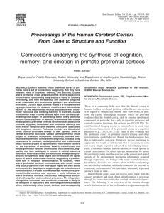 Connections underlying the synthesis of cognition,