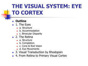 THE VISUAL SYSTEM: EYE TO CORTEX Outline