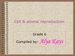 Cell and animal reproduction