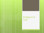 Energy in A Cell - Bishop Ireton High School