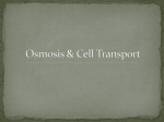 Osmosis & Cell Transport