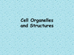 Subcellular Organelles and Structures