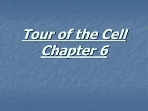Tour of the Cell Chapter 6