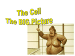 Student printout - The Cell Big Picture