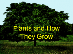 How Do Plants Use Their Parts?