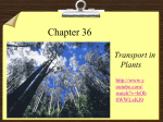 Ch. 36 Transport in plants