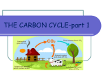 THE CARBON CYCLE - Issaquah Connect