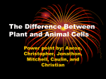 The Difference Between Plant and Animal Cells