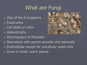What are Fungi