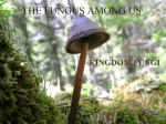the fungus among us - WHS-Rambo-Wiki