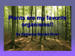 Plants are my favorite organisms!!