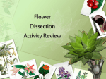 Flower Dissection FIB