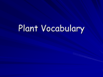 Plant vocabulary PowerPoint