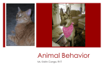 Animal Behavior - Ms. Canga`s page