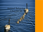 To what extent can behavior have evolved?