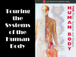 Touring the Systems of the Human Body