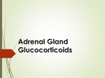 9-Adrenal gland2016-02