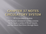 Chapter 37 Notes Circulatory and Respiratory Systems