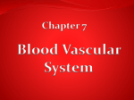 Chapter 7 Blood
