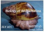 Lecture Slides on Archachatina marginata ZLY 201