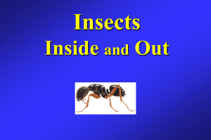 PowerPoint Presentation - Insects Inside and Out