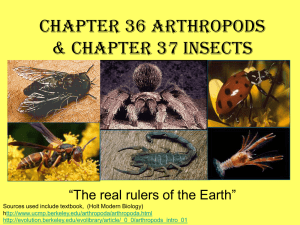 Chapter 36 Arthropods Chapter 37 Insects