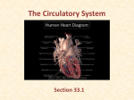 The Circulatory System - Southgate Community School District