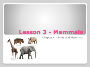 Lesson 3 - Mammals - Mother Teresa Regional School