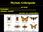 Largest phylum on earth Examples: spiders, ticks