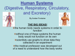 Human Systems (Digestive, Respiratory, Circulatory, and