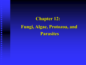 Fungi, Algae, Protozoa, and Multicellular Parasites