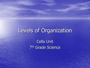 Levels of Organization - Ms. Pollei`s Science 7