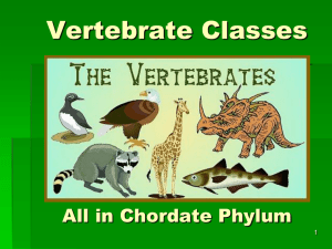 Vertebrate Classes - Fulton County Schools