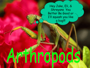 Arthropod Notes - Solon City Schools